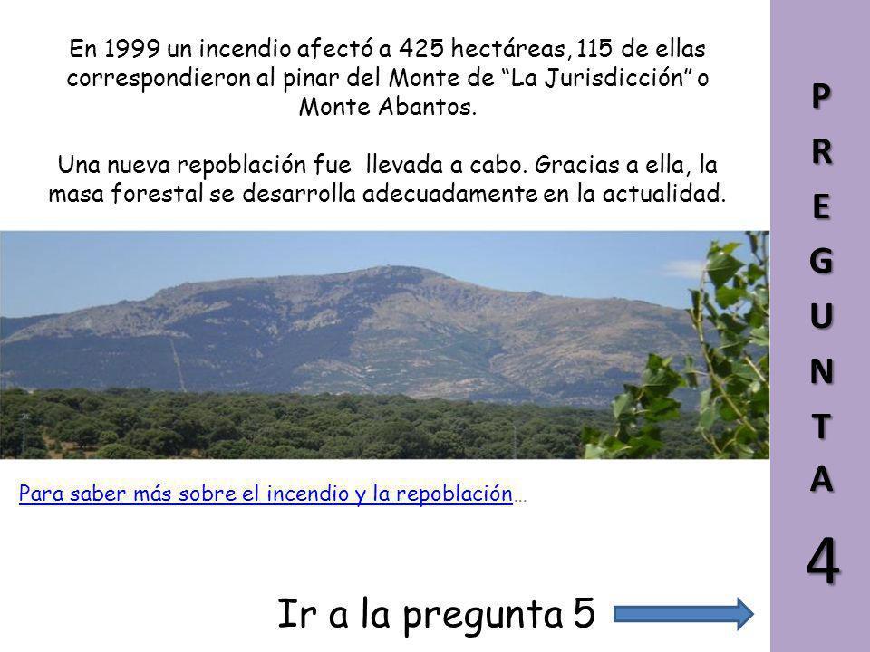 Las especies empleadas mayoritariamente en la repoblación fueron el pino resinero (Pinus pinaster), el silvestre (P. sylvestris) y el laricio (P. nigr