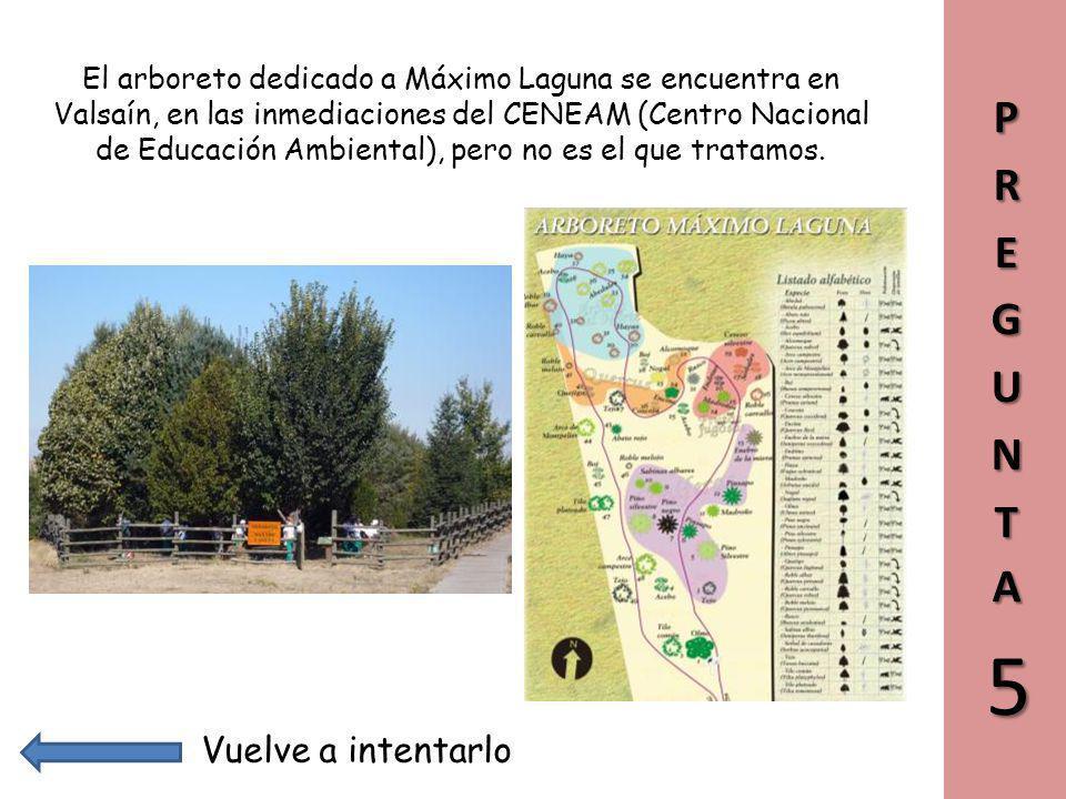 Su obra destacable es la Flora Forestal Española I y II (1884, 1890), trabajo para el que contó con la colaboración de Pedro Ávila y Justo Salinas. Má