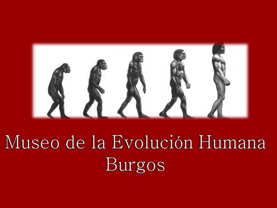 El hallazgo en 1998 de un hacha de Cueva de Atapuerca (Excalibur), donde solo había miles de huesos, barro y rocas, maravilló a los paleontólogos del equipo de Juan Luis Arsuaga.