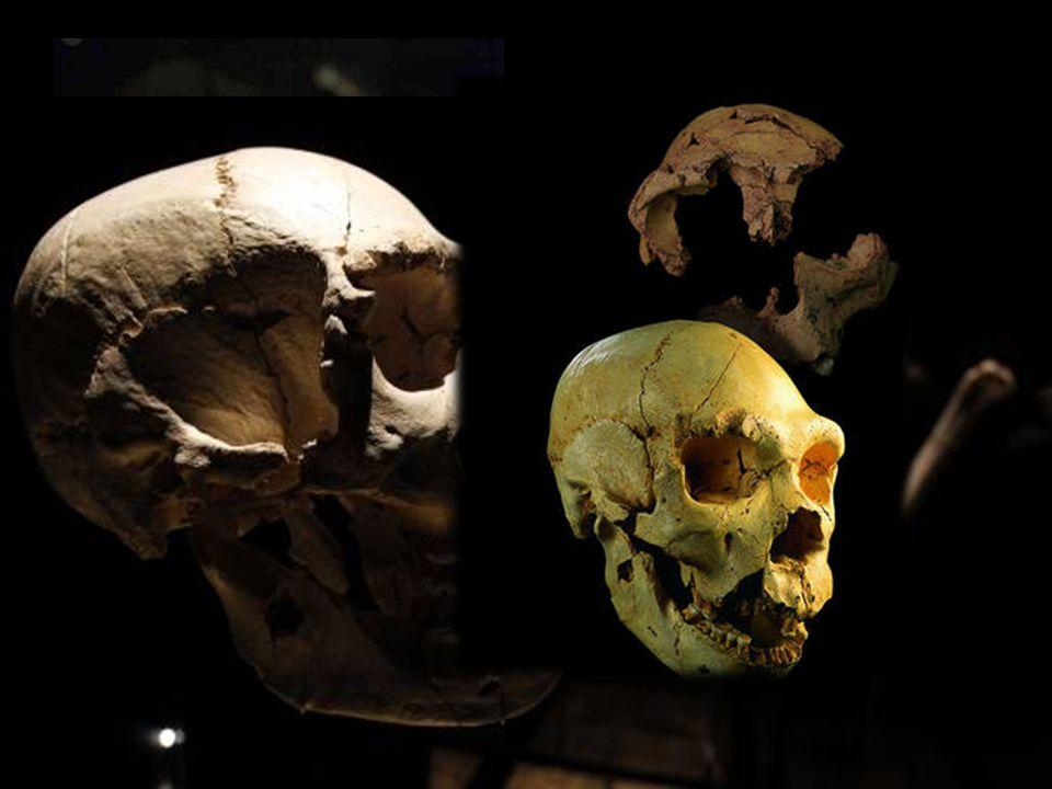 El Museo burgalés no está dedicado únicamente al yacimiento de Atapuerca, sino a toda la historia e investigación de la evolución humana. Por eso, ent