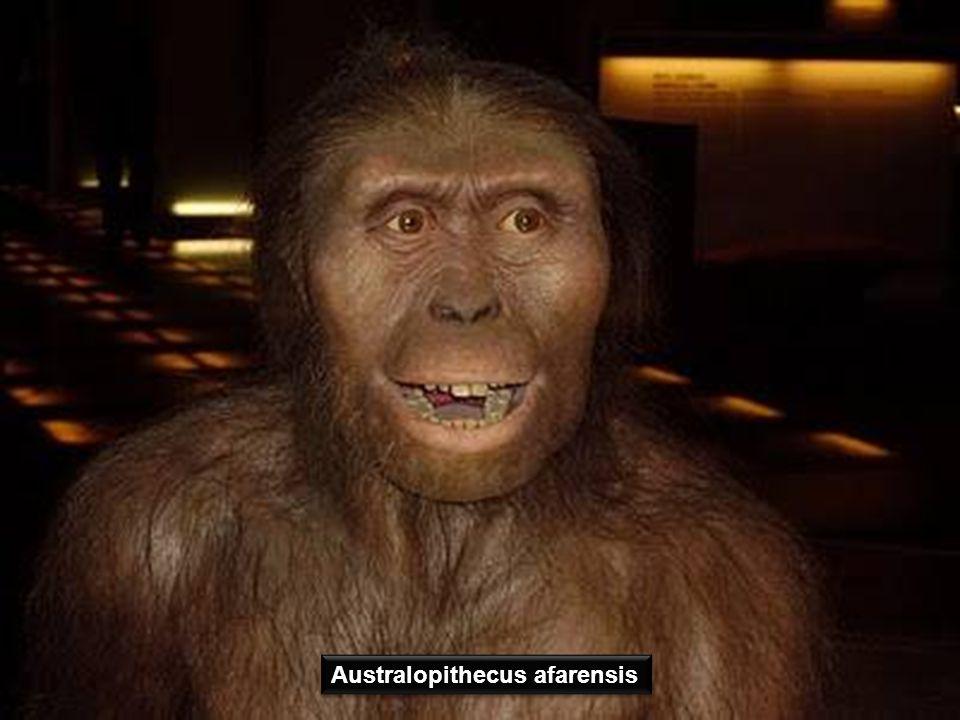 Fue encontrado en 1992 en la Sima de los Huesos de Atapuerca y bautizado como Miguelón en honor ciclista Miguel Induráin. Perteneció a un Homo Heildel