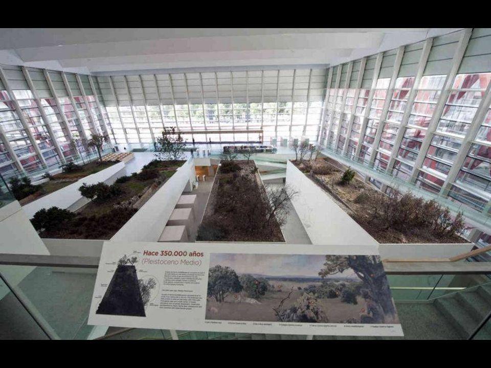 Uno de puntos más espectaculares del museo: 10 hiperrealistas reproducciones de antepasados del ser humano.