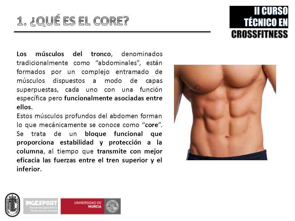 Los músculos del tronco, denominados tradicionalmente como abdominales, están formados por un complejo entramado de músculos dispuestos a modo de capa