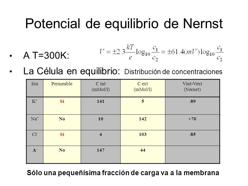 Potencial de equilibrio de Nernst A T=300K: IónPermeableC int (mMol/l) C ext (mMol/l) Vint-Vext (Nernst) K+K+ Si1415-89 Na + No10142+70 Cl - Si4103-85