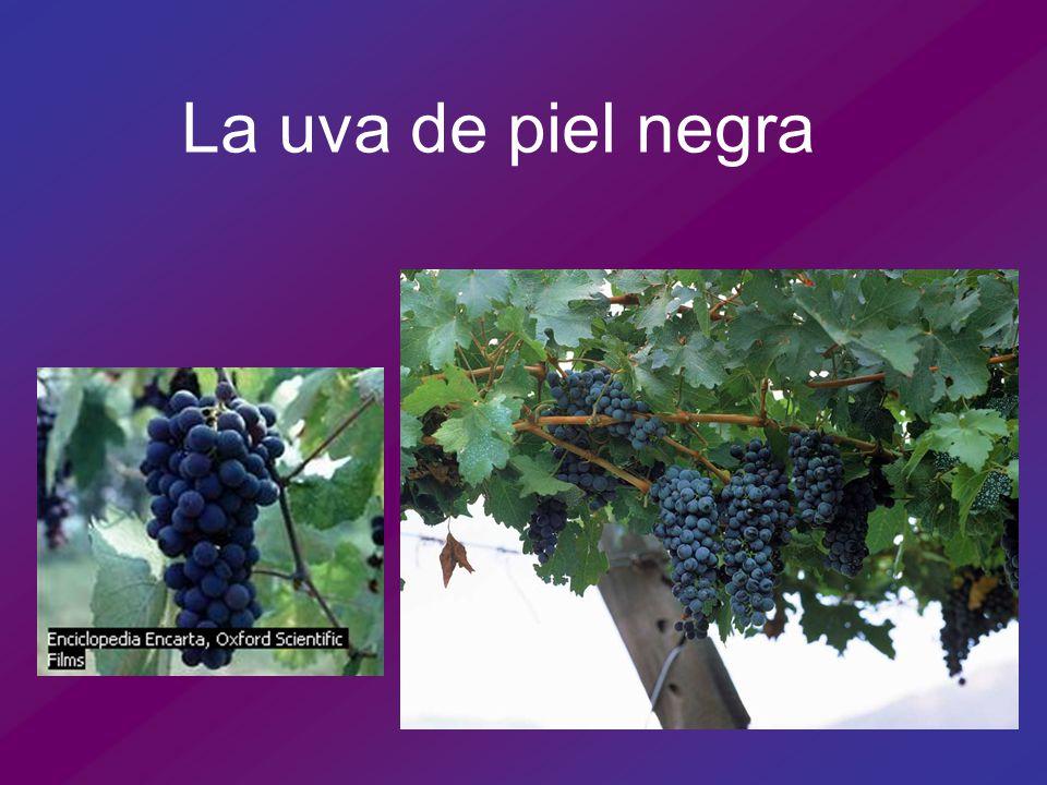 La uva de piel negra