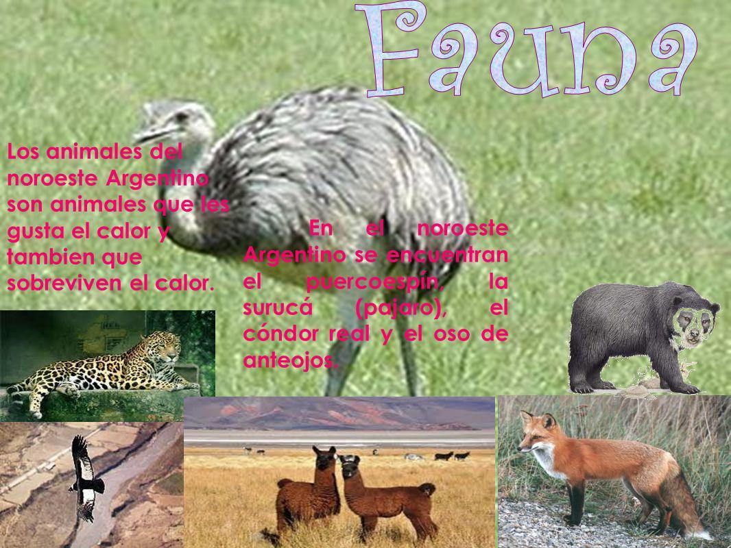 En el noroeste Argentino se encuentran el puercoespín, la surucá (pajaro), el cóndor real y el oso de anteojos. Los animales del noroeste Argentino so