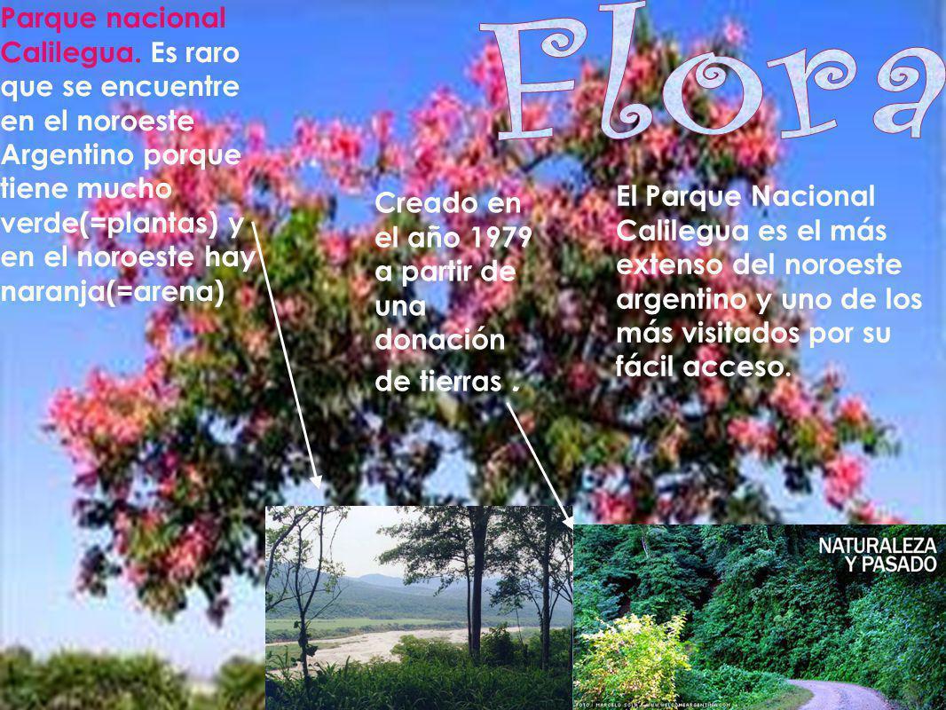 Parque nacional Calilegua. Es raro que se encuentre en el noroeste Argentino porque tiene mucho verde(=plantas) y en el noroeste hay naranja(=arena) C