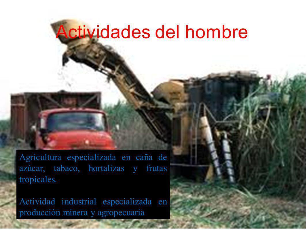 Actividades del hombre Agricultura especializada en caña de azúcar, tabaco, hortalizas y frutas tropicales. Actividad industrial especializada en prod