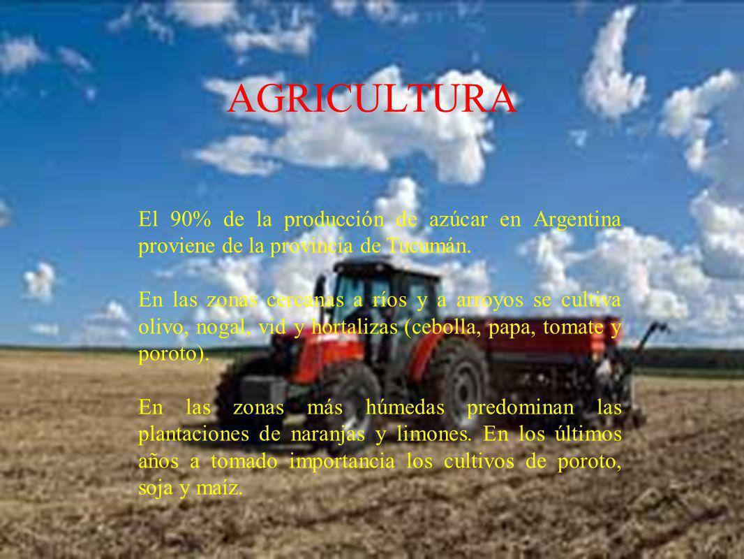 AGRICULTURA El 90% de la producción de azúcar en Argentina proviene de la provincia de Tucumán. En las zonas cercanas a ríos y a arroyos se cultiva ol