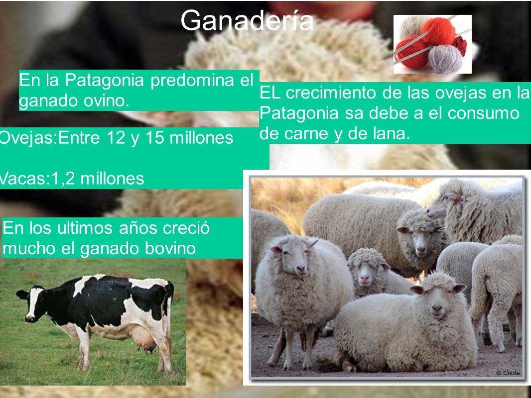 Ganadería En la Patagonia predomina el ganado ovino. Ovejas:Entre 12 y 15 millones Vacas:1,2 millones En los ultimos años creció mucho el ganado bovin