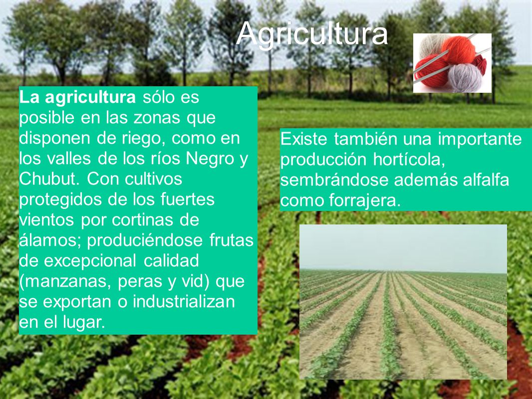 Agricultura La agricultura sólo es posible en las zonas que disponen de riego, como en los valles de los ríos Negro y Chubut. Con cultivos protegidos