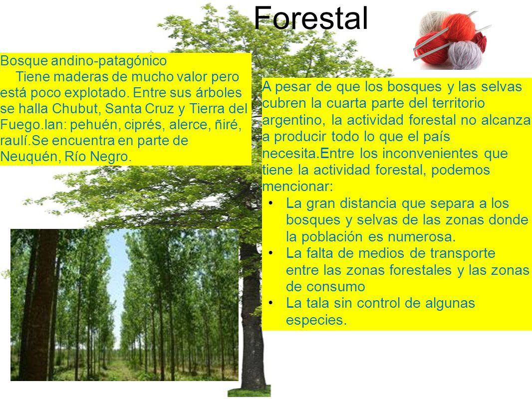 Forestal A pesar de que los bosques y las selvas cubren la cuarta parte del territorio argentino, la actividad forestal no alcanza a producir todo lo que el país necesita.Entre los inconvenientes que tiene la actividad forestal, podemos mencionar: La gran distancia que separa a los bosques y selvas de las zonas donde la población es numerosa.