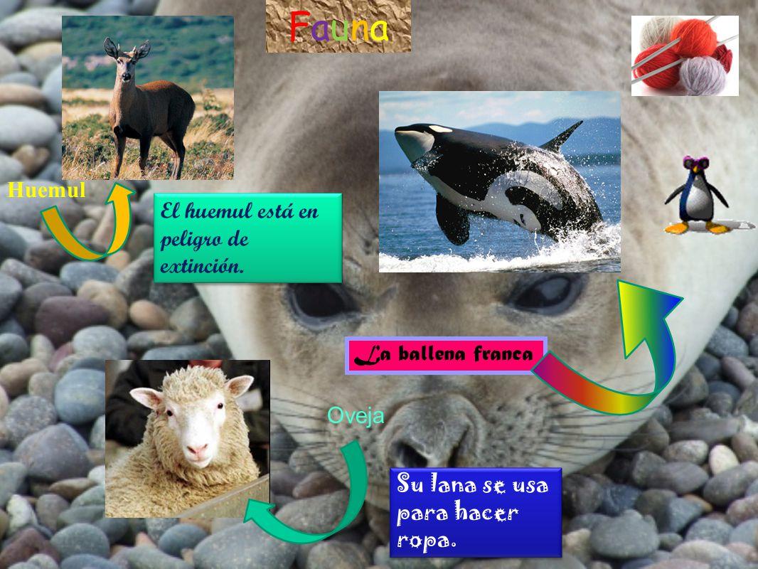 FaunaFauna Huemul El huemul está en peligro de extinción. La ballena franca Su lana se usa para hacer ropa. Su lana se usa para hacer ropa. Oveja