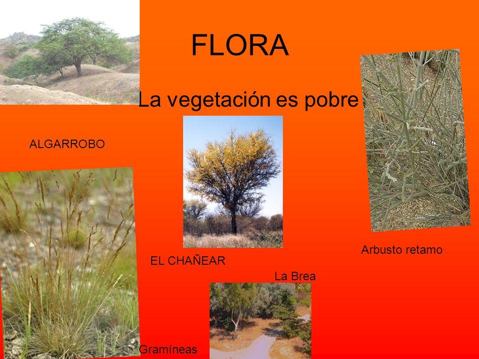 Fauna La flora y la fauna varían dentro de la región según el clima, el suelo y el régimen pluvial. ZORRO Llama Vicuña guanaco