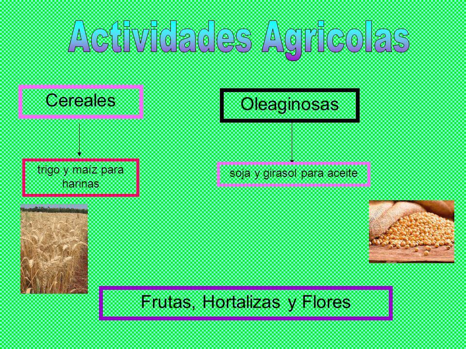 Cereales trigo y maíz para harinas Oleaginosas soja y girasol para aceite Frutas, Hortalizas y Flores
