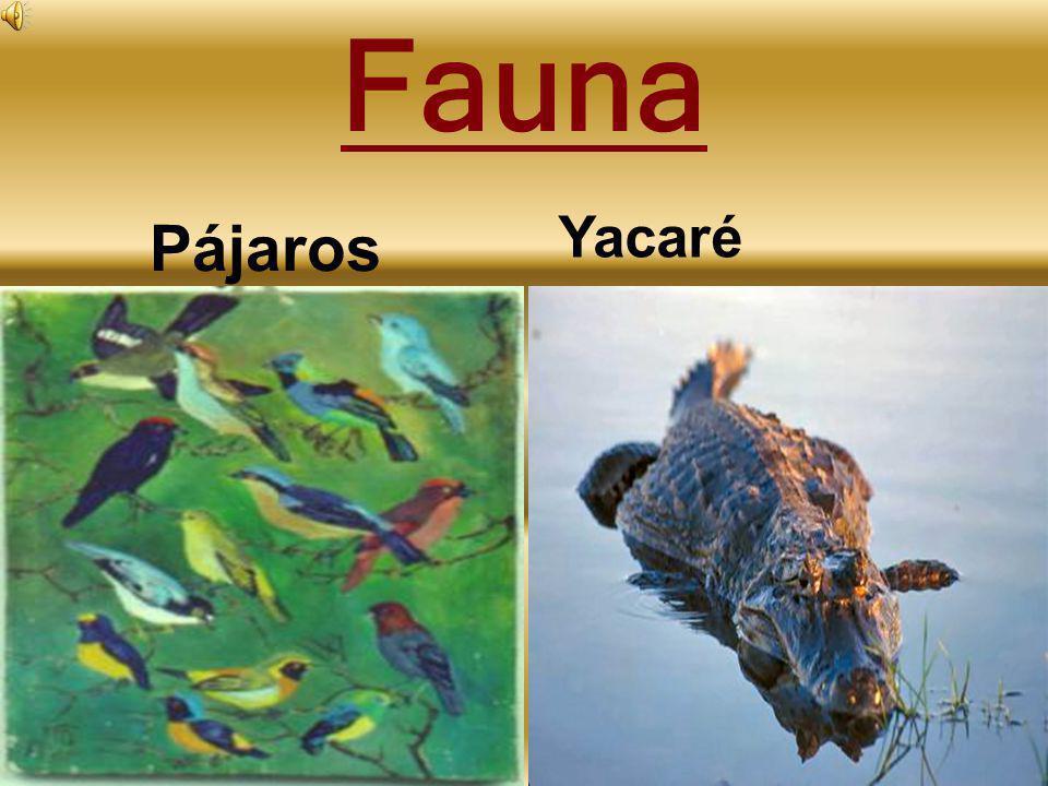 Fauna Pájaros Yacaré
