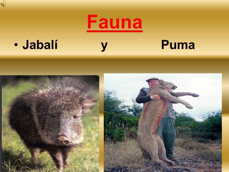 Fauna Jabalí y Puma