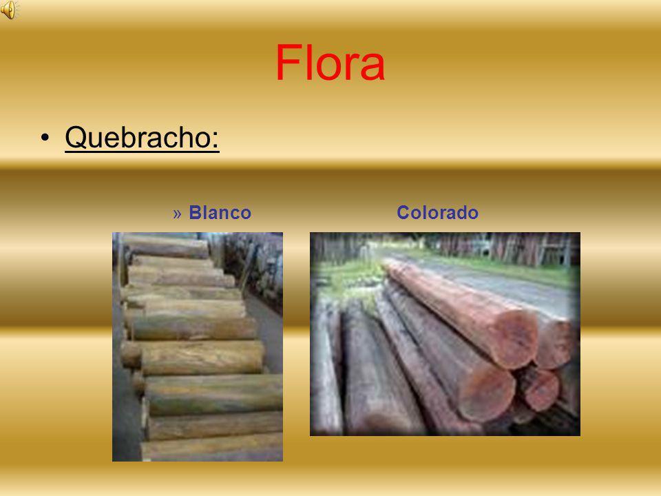 Flora Quebracho: »B»Blanco Colorado