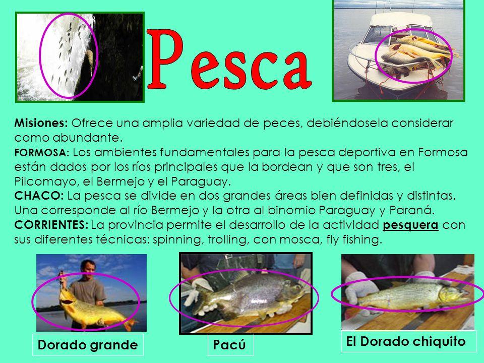 Misiones: Ofrece una amplia variedad de peces, debiéndosela considerar como abundante. FORMOSA: Los ambientes fundamentales para la pesca deportiva en