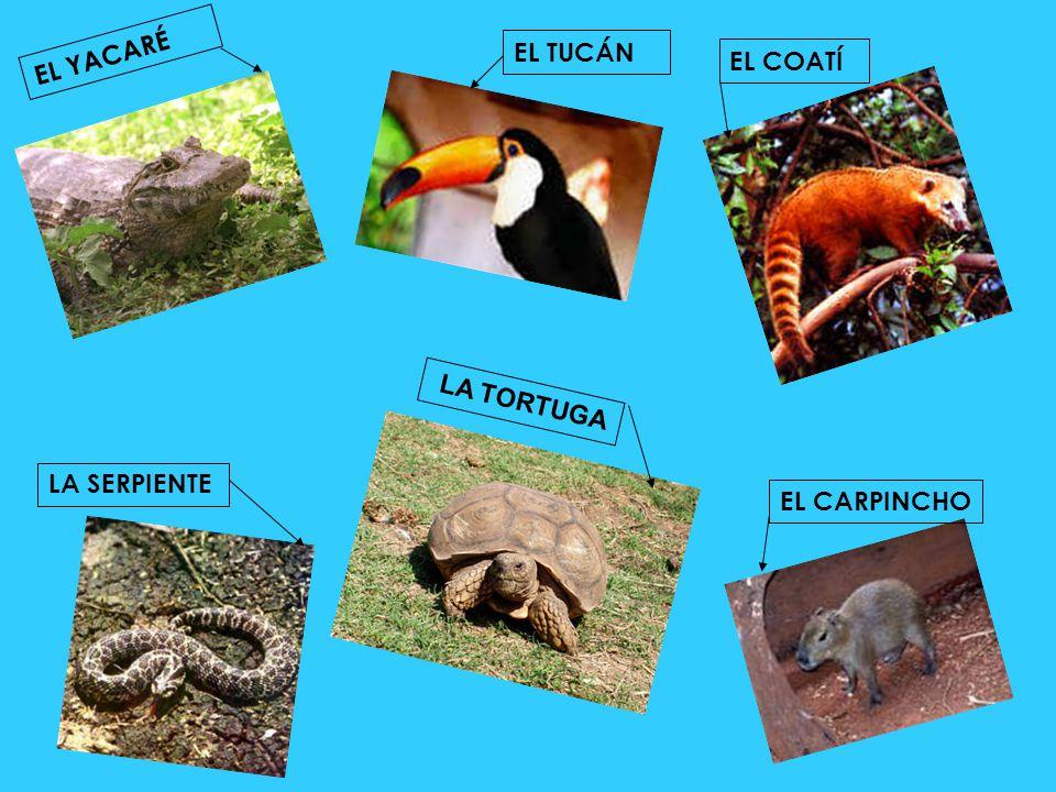 MISIONES: E n la Selva Misionera se hallan unas 2.000 especies de plantas FORMOSA : S obre los suelos bajos y pesados se desarrollan extensos palmaras.