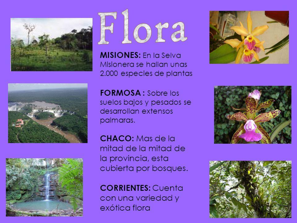 MISIONES: E n la Selva Misionera se hallan unas 2.000 especies de plantas FORMOSA : S obre los suelos bajos y pesados se desarrollan extensos palmaras