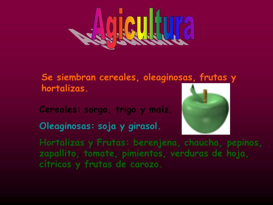 Se siembran cereales, oleaginosas, frutas y hortalizas.