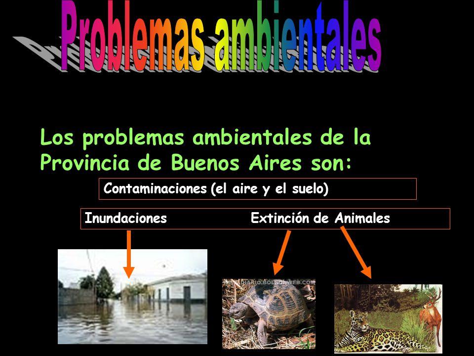 Los problemas ambientales de la Provincia de Buenos Aires son: Contaminaciones (el aire y el suelo) Inundaciones Extinción de Animales
