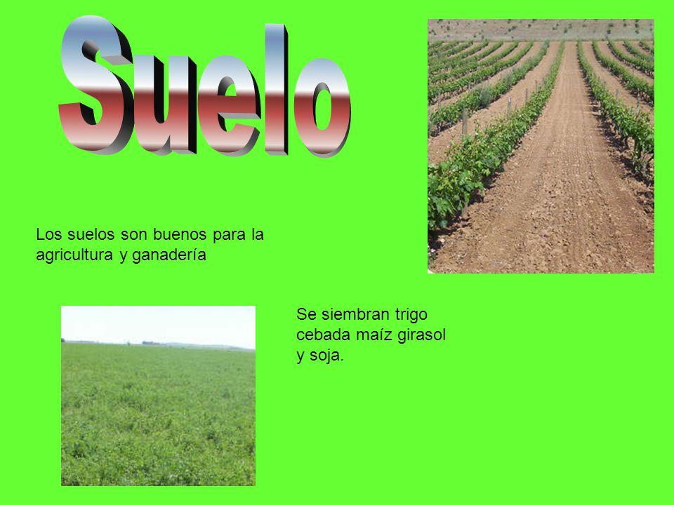 Los suelos son buenos para la agricultura y ganadería Se siembran trigo cebada maíz girasol y soja.