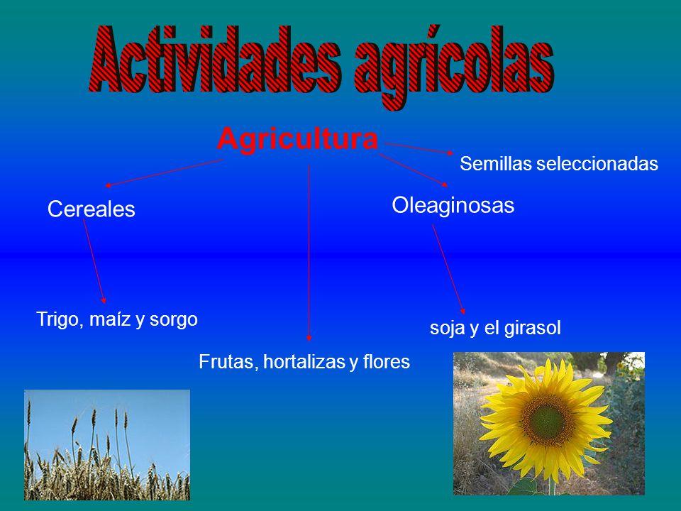 Agricultura Cereales Trigo, maíz y sorgo Oleaginosas soja y el girasol Frutas, hortalizas y flores Semillas seleccionadas