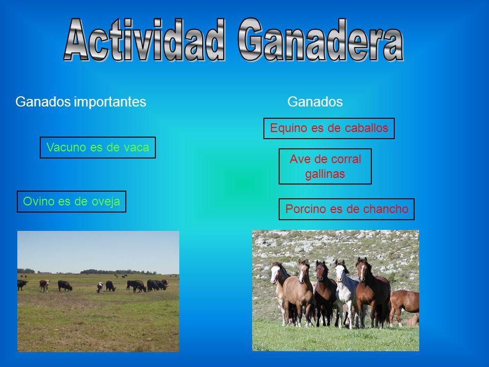Ganados importantes Vacuno es de vaca Ovino es de oveja Ganados Equino es de caballos Porcino es de chancho Ave de corral gallinas