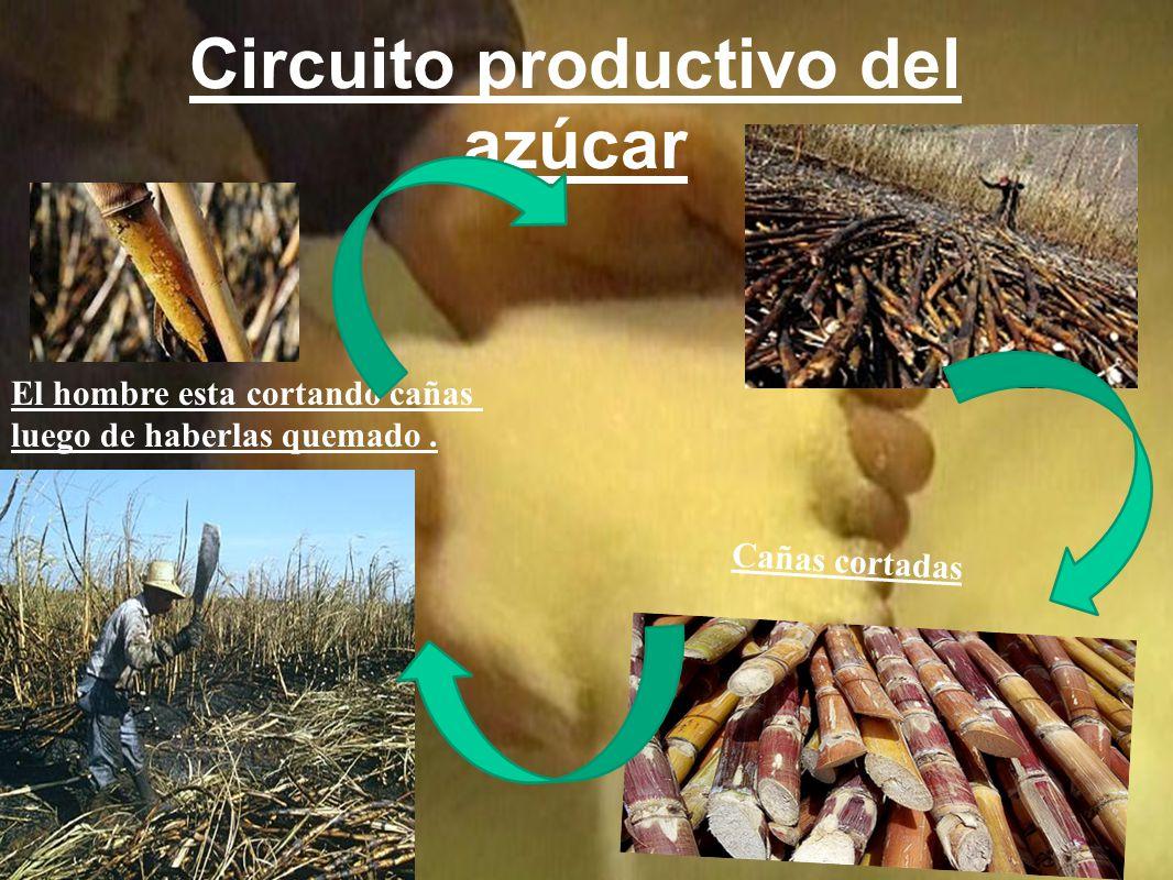Circuito productivo del azúcar El hombre esta cortando cañas luego de haberlas quemado.