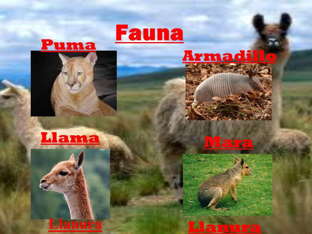 Fauna Puma Llama Armadillo Mara Llanura