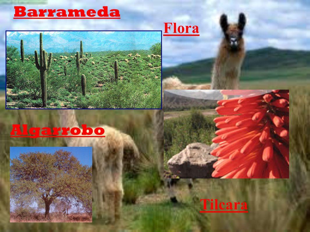 Flora Tilcara Algarrobo Barrameda