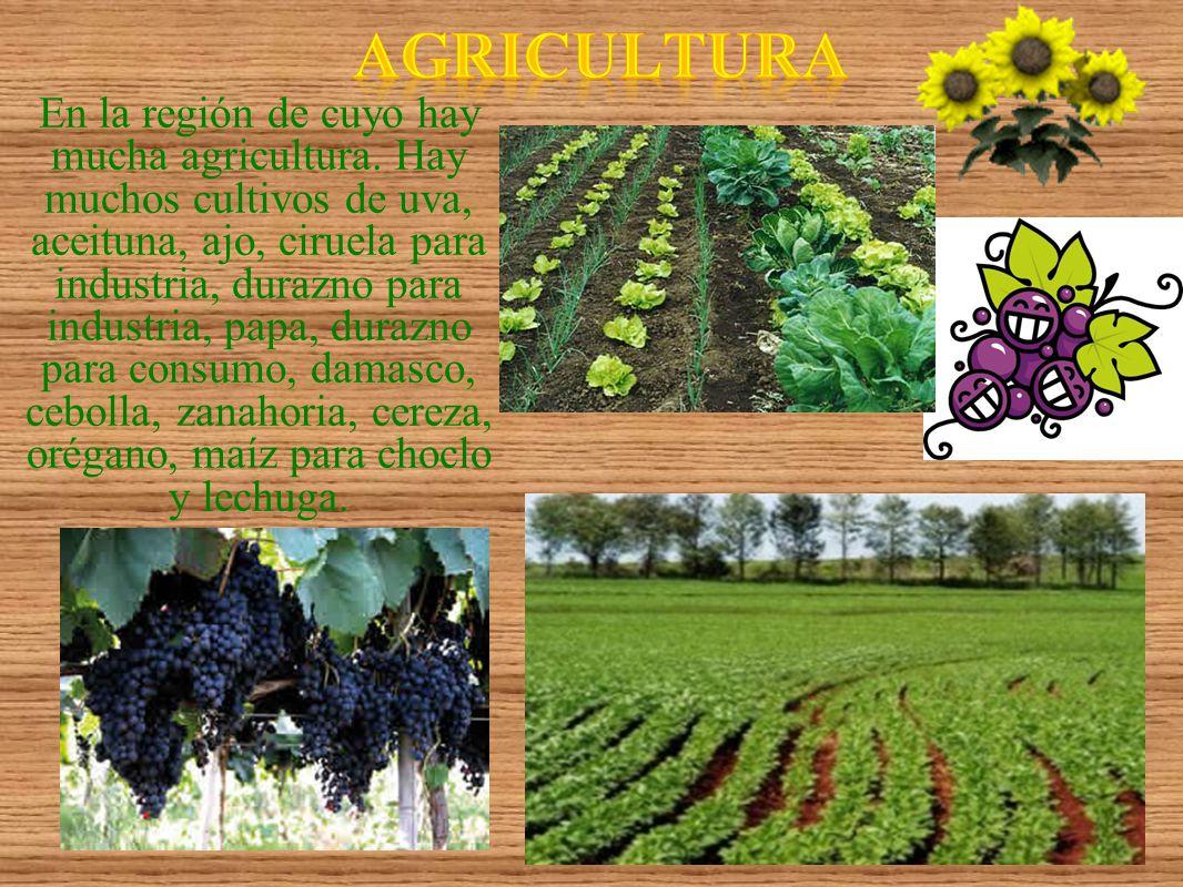 En la región de cuyo hay mucha agricultura. Hay muchos cultivos de uva, aceituna, ajo, ciruela para industria, durazno para industria, papa, durazno p