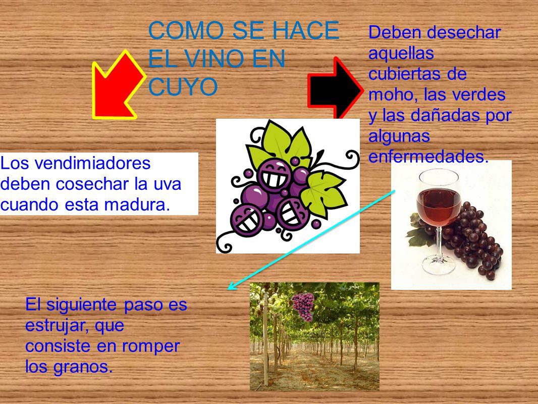 COMO SE HACE EL VINO EN CUYO Los vendimiadores deben cosechar la uva cuando esta madura. Deben desechar aquellas cubiertas de moho, las verdes y las d
