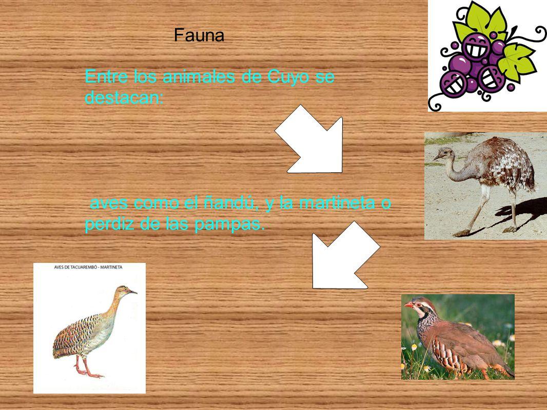 Fauna Entre los animales de Cuyo se destacan: aves como el ñandú, y la martineta o perdiz de las pampas.