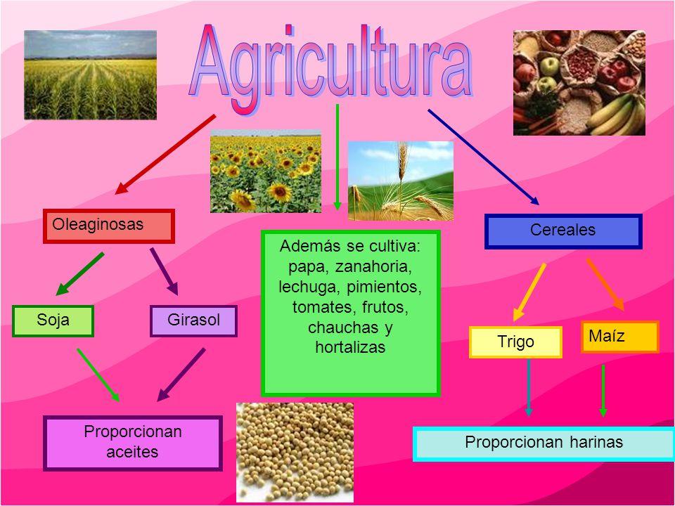 Oleaginosas Cereales SojaGirasol Trigo Maíz Proporcionan aceites Proporcionan harinas Además se cultiva: papa, zanahoria, lechuga, pimientos, tomates,
