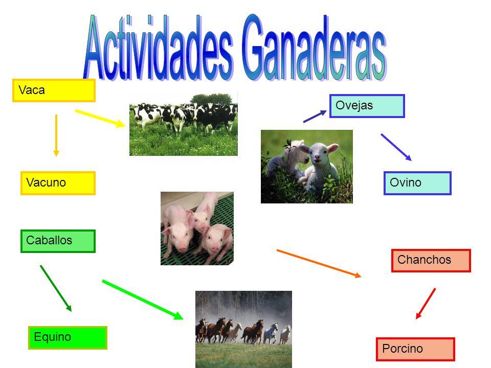 Vacuno Vaca Ovino Ovejas Caballos Porcino Chanchos Equino