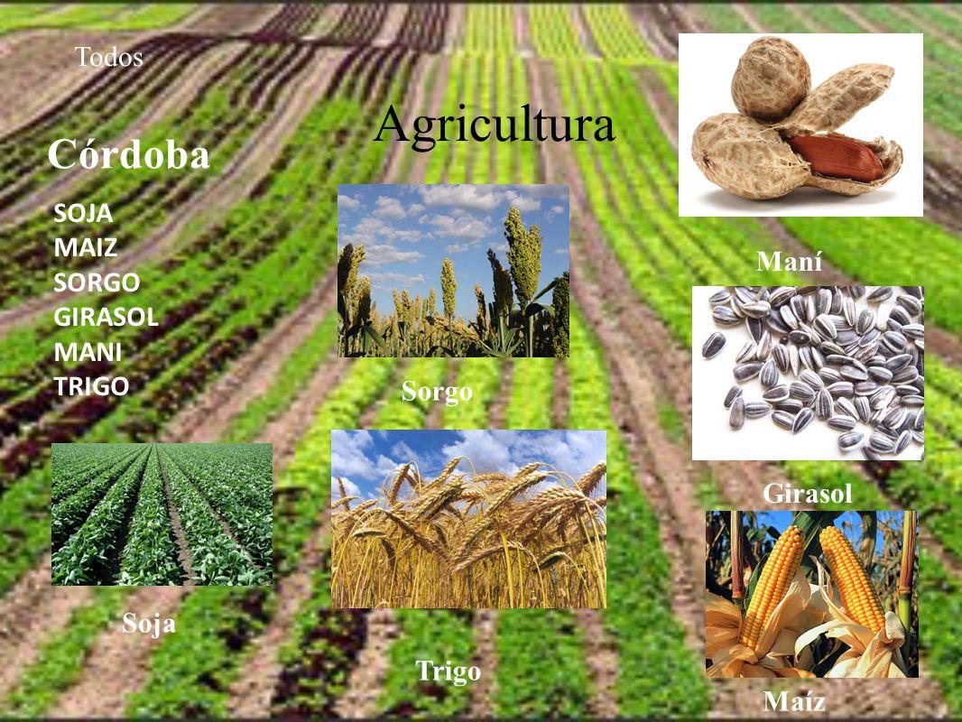 Agricultura Todos SOJA MAIZ SORGO GIRASOL MANI TRIGO Córdoba Maní Girasol Sorgo Trigo Soja Maíz