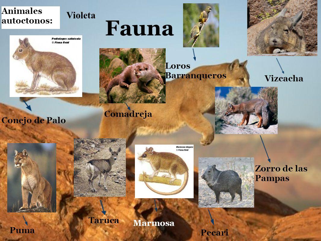Fauna Animales autoctonos: Taruca Puma Pecari Vizcacha Conejo de Palo Comadreja Marmosa Zorro de las Pampas Loros Barranqueros Violeta