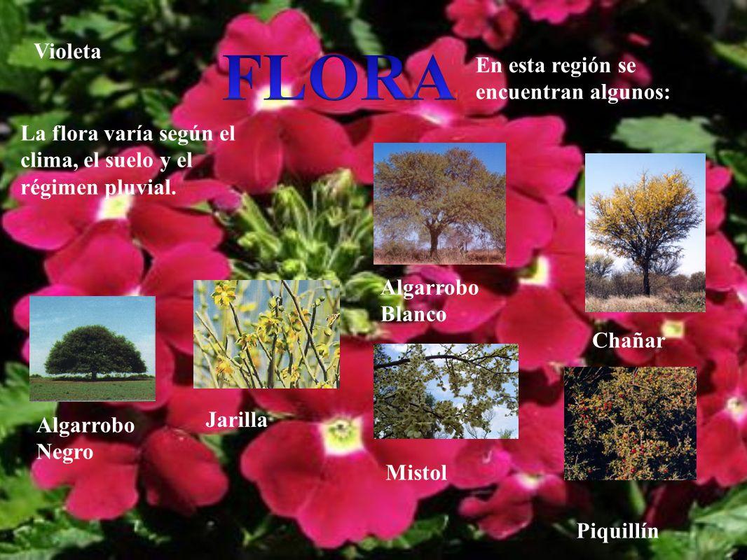 La flora varía según el clima, el suelo y el régimen pluvial. En esta región se encuentran algunos: Algarrobo Blanco Algarrobo Negro Chañar Jarilla Mi