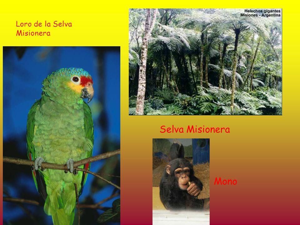 Loro de la Selva Misionera Selva Misionera Mono