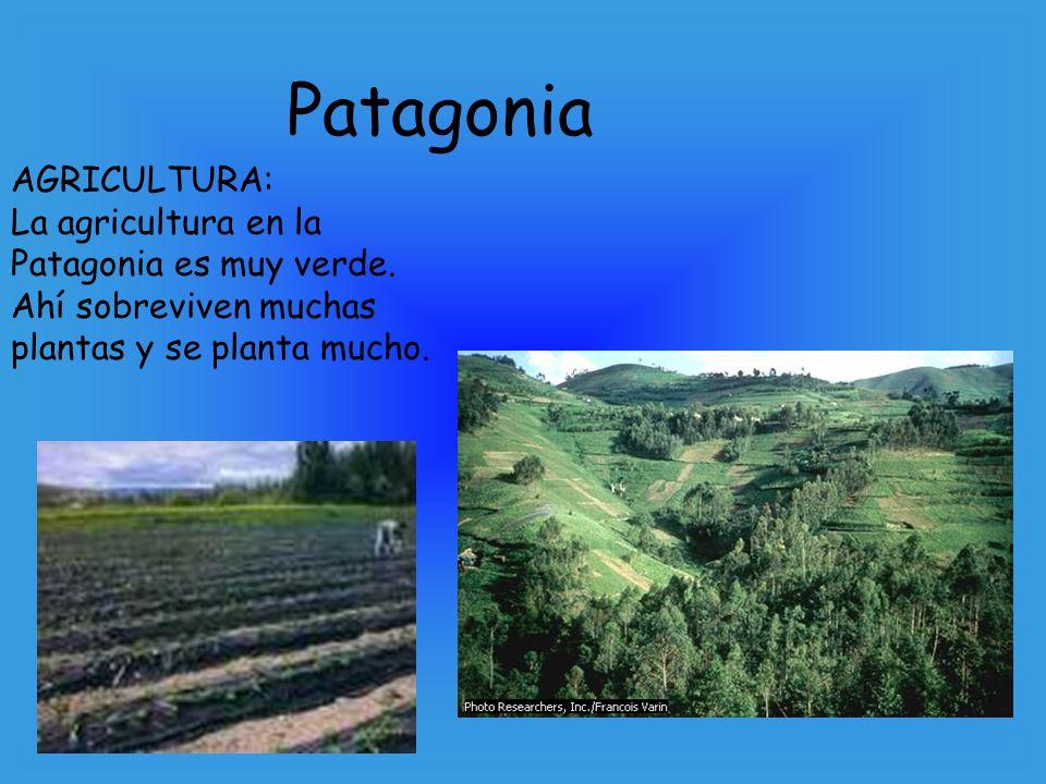 Patagonia AGRICULTURA: La agricultura en la Patagonia es muy verde. Ahí sobreviven muchas plantas y se planta mucho.