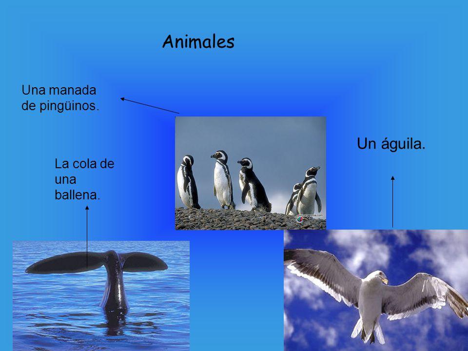 La cola de una ballena. Un águila. Una manada de pingüinos. Animales