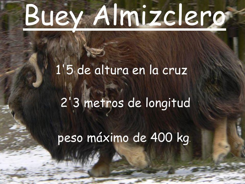 Zorro Ártico habita en huras a lo largo y ancho extremas de hasta -50º capa blanca de pelaje cambia por otro pelaje pardo- grisáceo más corto