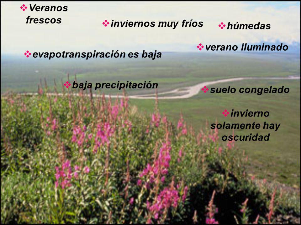 FAUNA En la tundra podemos encontrar los siguientes animales: