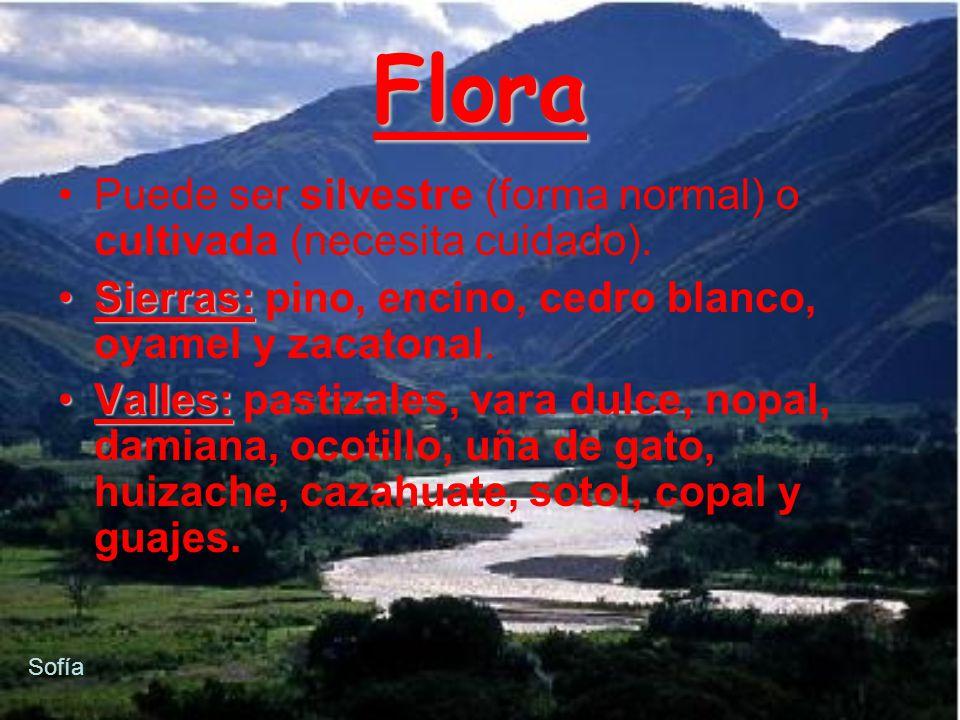 copal Pino Cedro blanco encino copal guajes sotol pastizales nopal oyamel ocotillo Vara dulce Uña de gato damianazahuacatezacatonal Flora