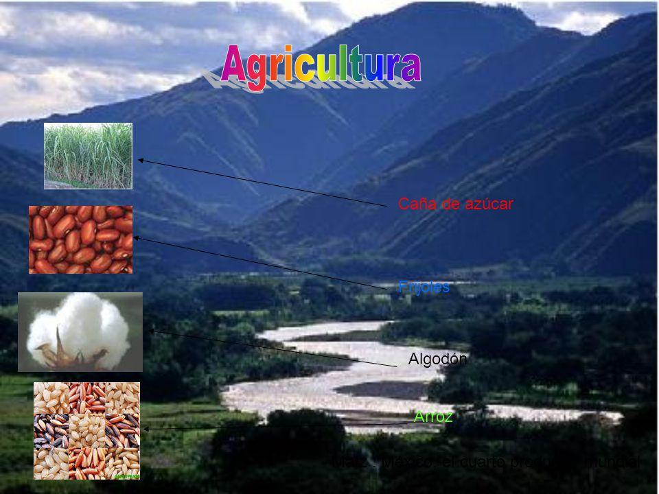 Trucha Atún Mexico esta entre los 20 mejores productores del mundo.