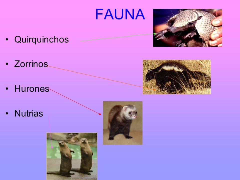 FOTOS FAUNA comadrejas lobos monos Gatos monteses conejos corzuelos Oso hormiguero tapires