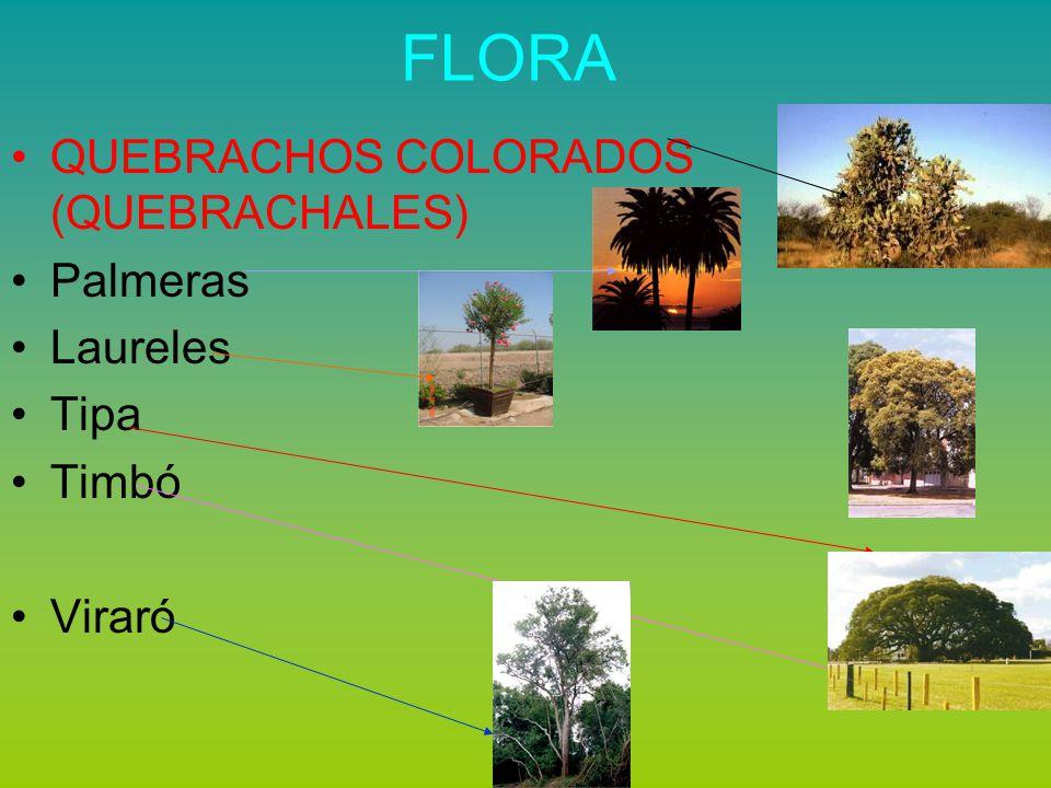 FLORA Roble Cedro Lapacho Plantas trepadoras y arbustos espinosos como los cardones y bromelias